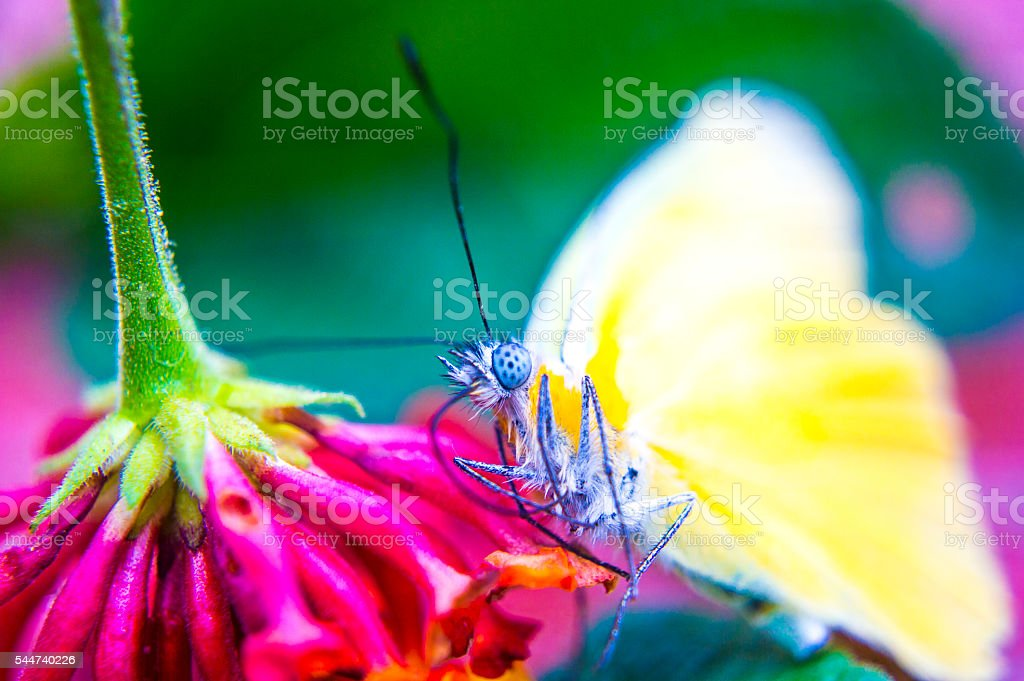 Yellow buterfly bottom right side stock photo