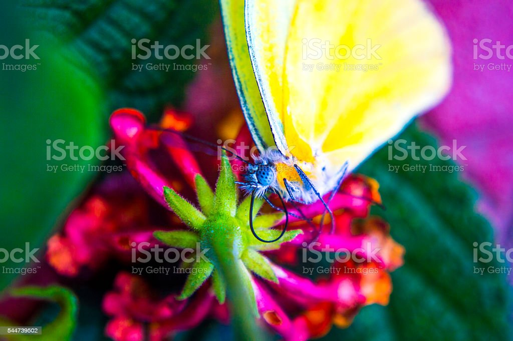 Yellow buterfly from the top stock photo