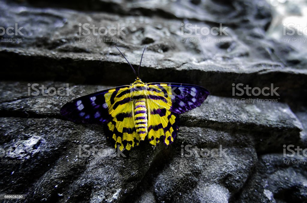 A yellow butterfly on the ancient wall in Angkor Wat stock photo
