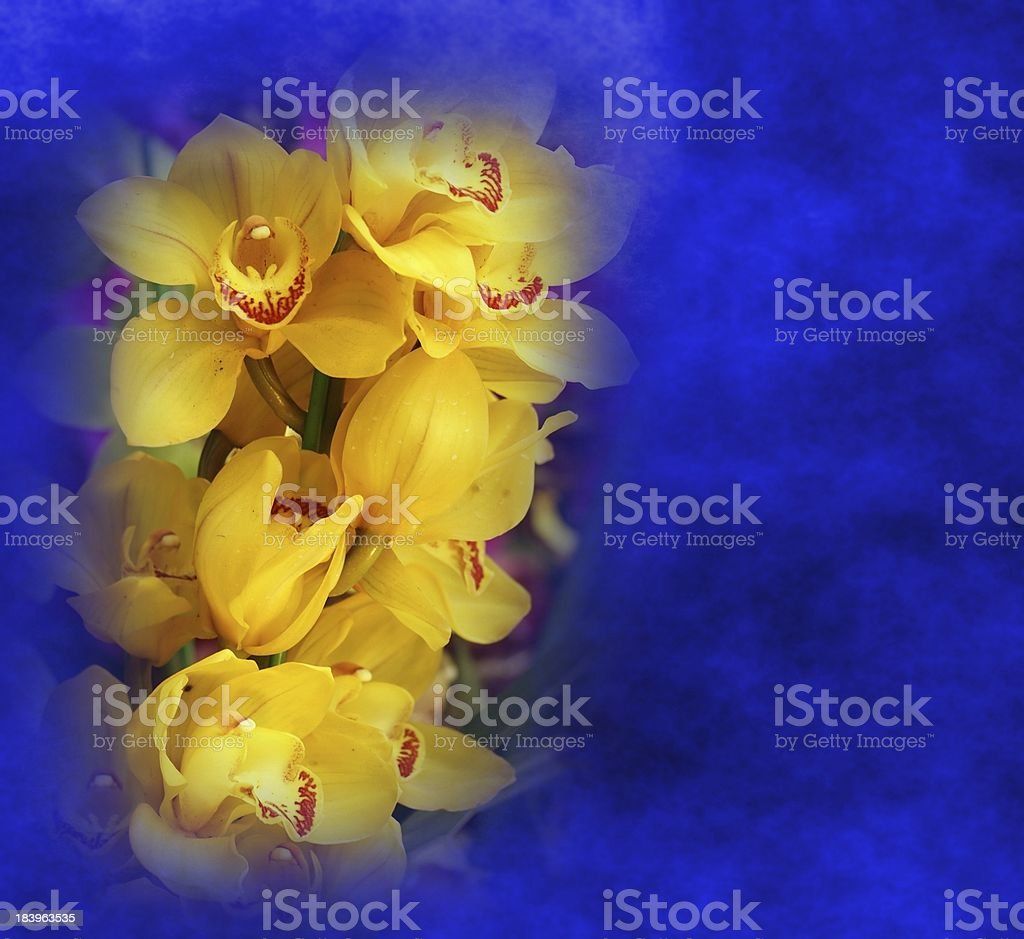 Yellow Butterfly Orchids stock photo