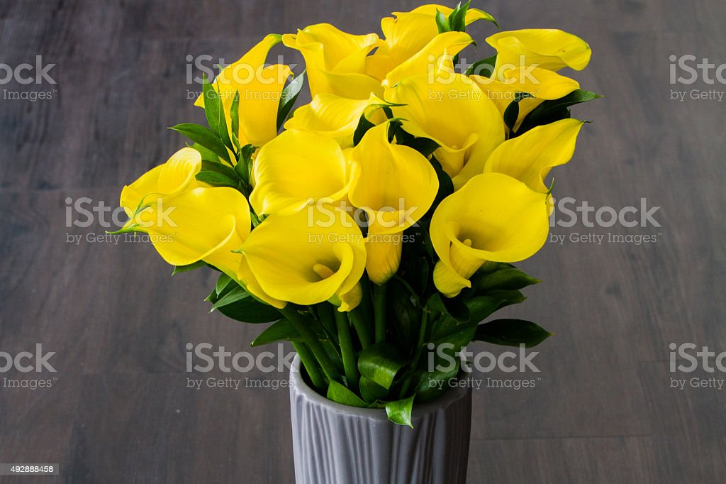 Yellow Calla lilies royalty-free stock photo