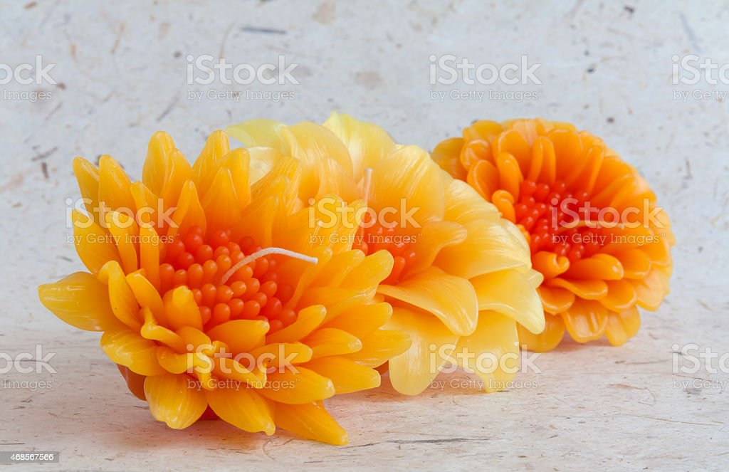 Yellow candle flower set royalty-free stock photo