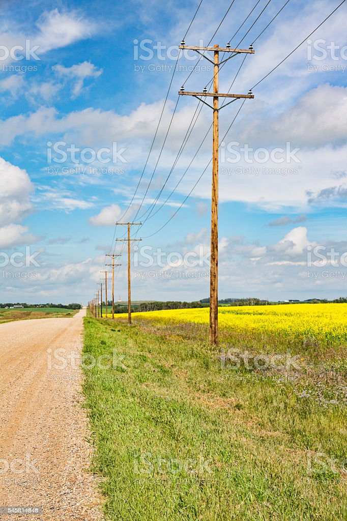 Yellow Canola Field Beside Country Road stock photo