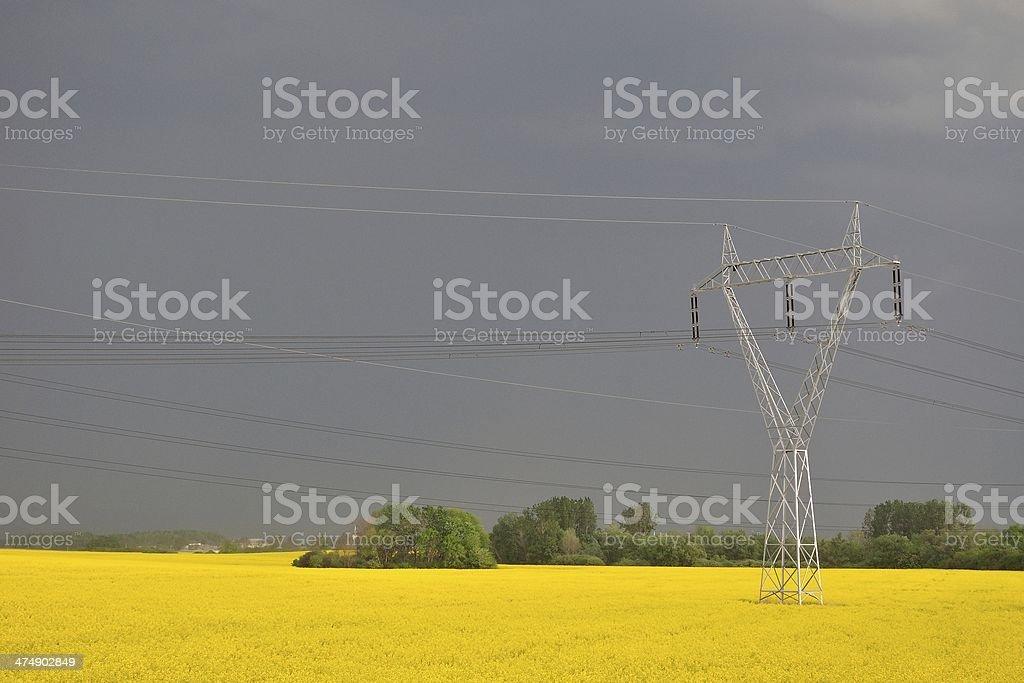 Żółty canola pole zbiór zdjęć royalty-free