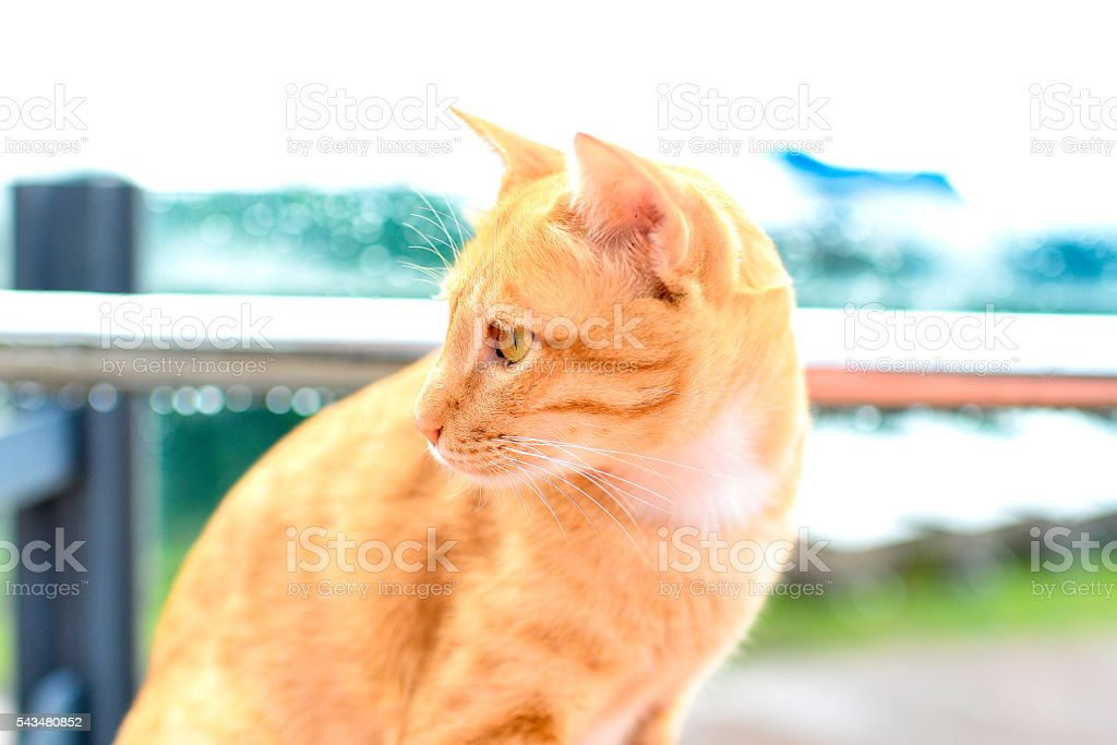 yellow cat looking out stock photo