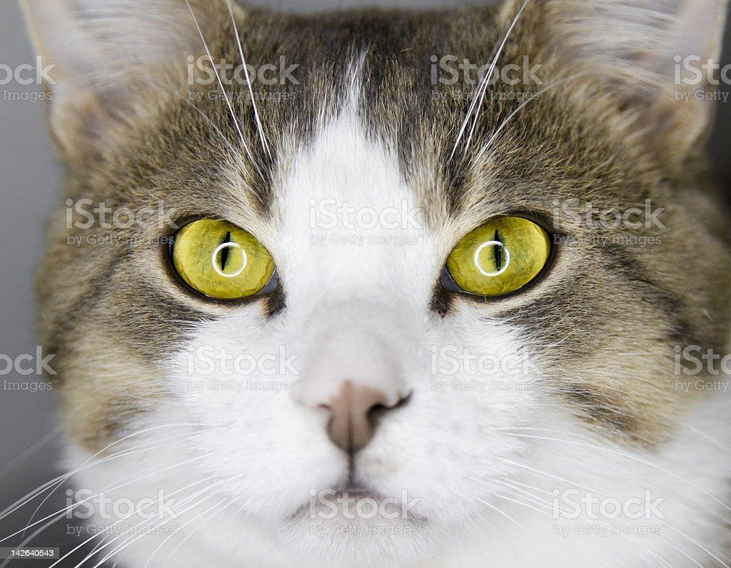 Yellow Cat's Eyes stock photo