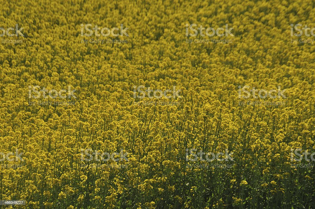 Yellow cloud stock photo