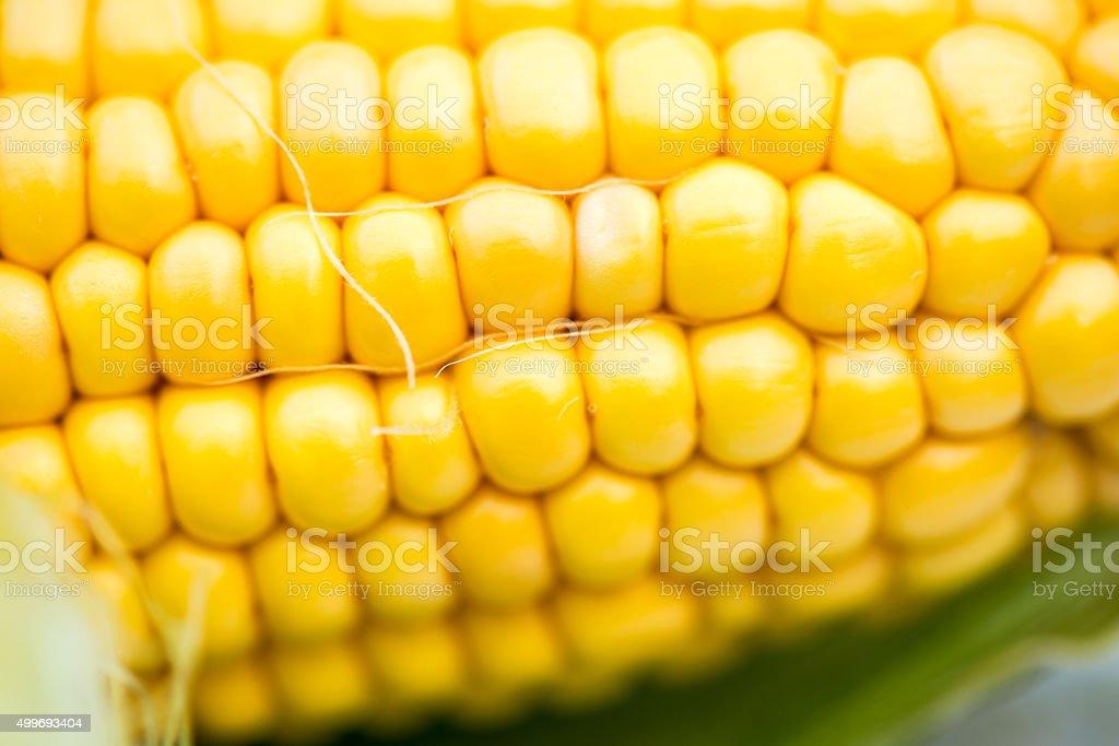 Yellow Corn Cob Closeup, Macro Shot stock photo
