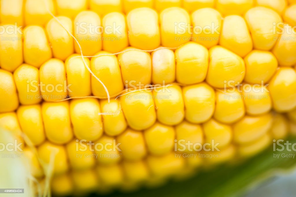 Yellow Corn Cob Closeup, Macro Shot stock photo