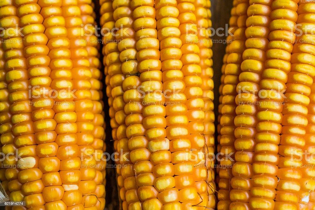 Yellow corn on the cob stock photo
