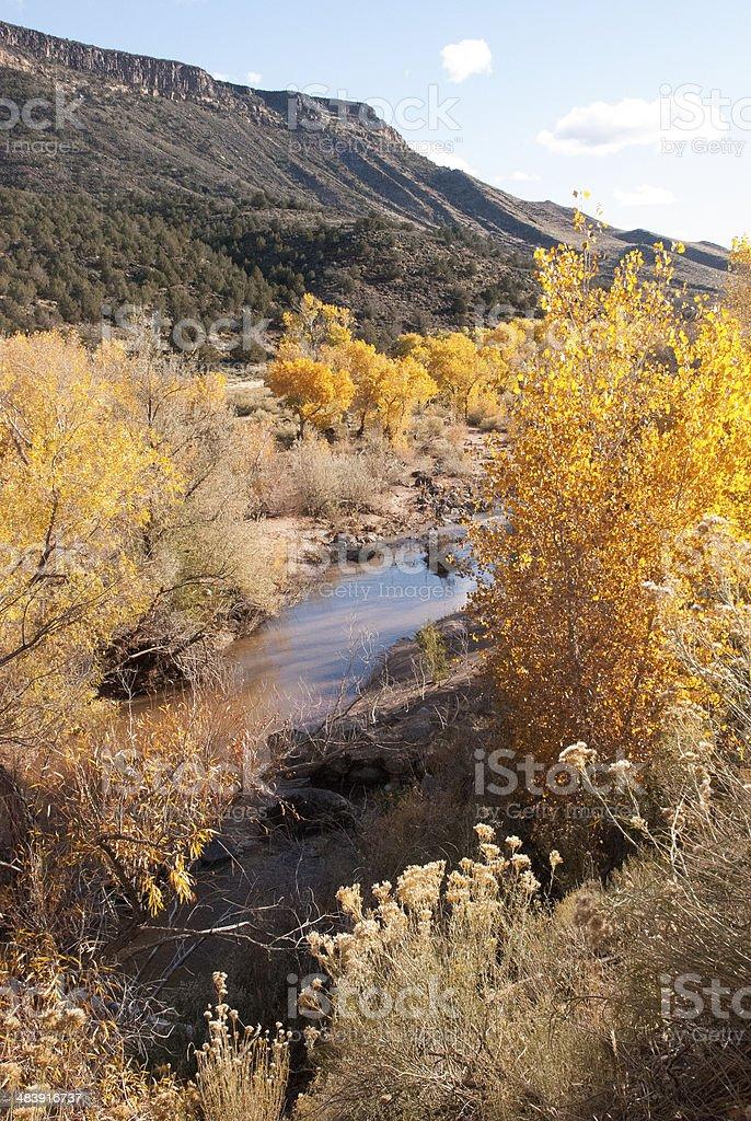 Yellow Cottonwoods along Kolob River north of Virgin Utah stock photo