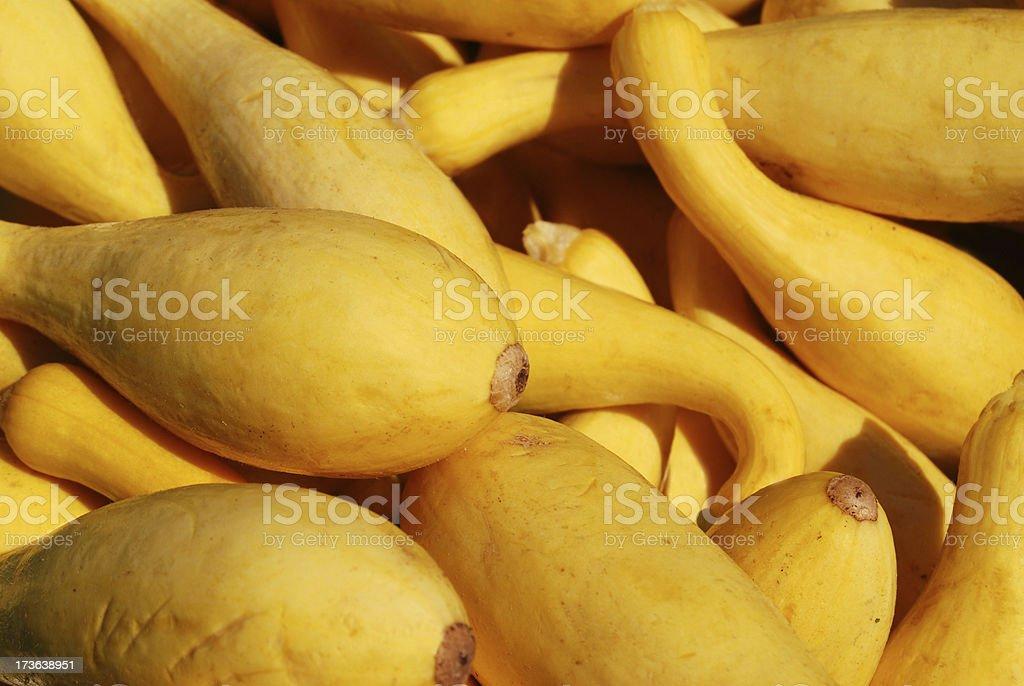 Yellow Crookneck Squash stock photo