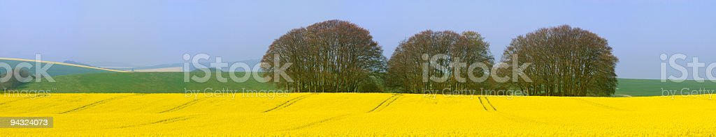 Yellow crop, triple copse, future fuel royalty-free stock photo