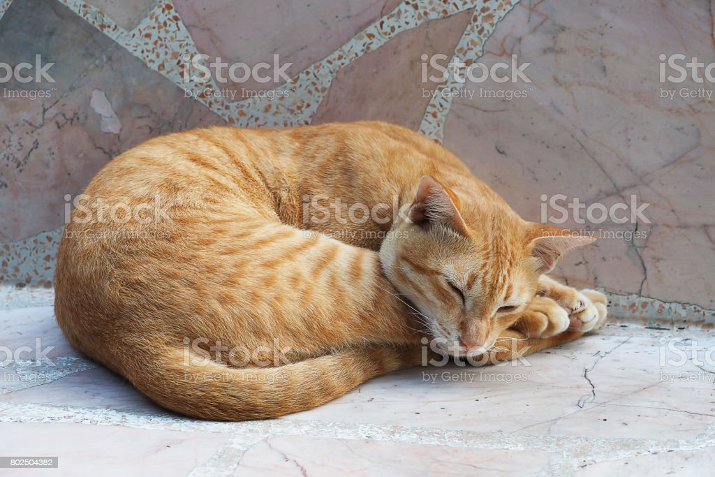 Yellow cute cat sleeping on marble chair stock photo