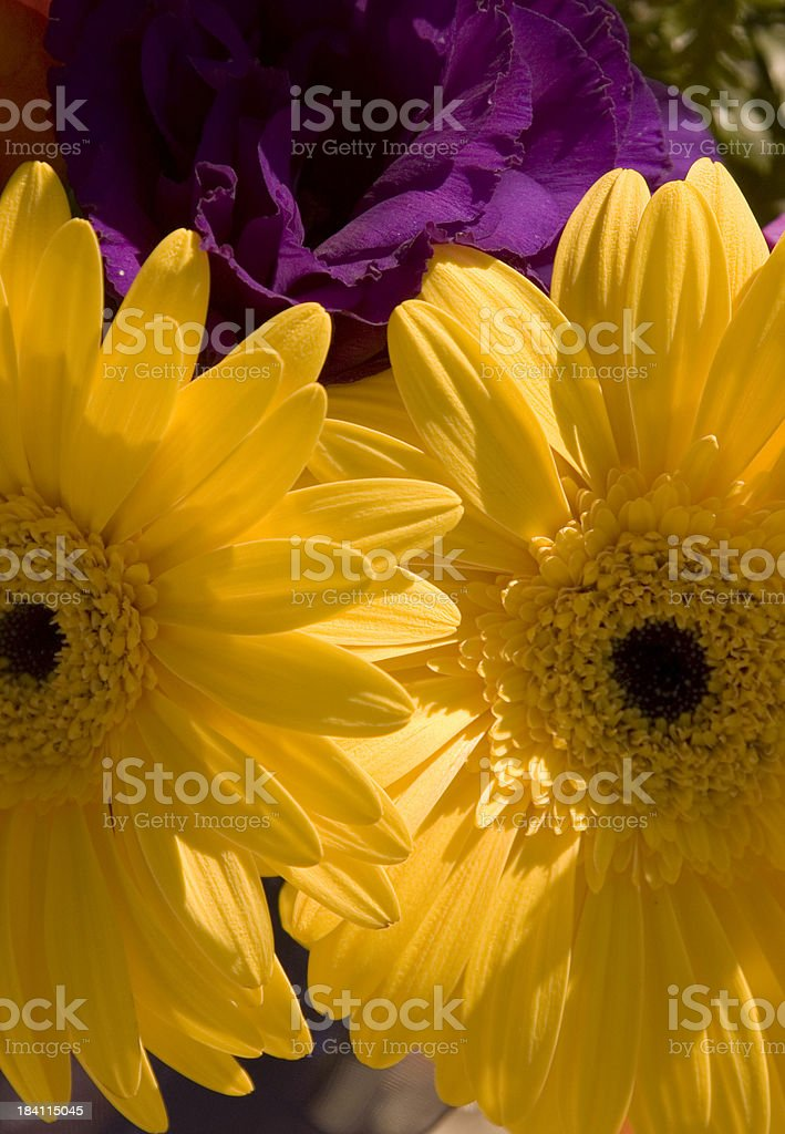 Yellow daisies smile in the sun. royalty-free stock photo