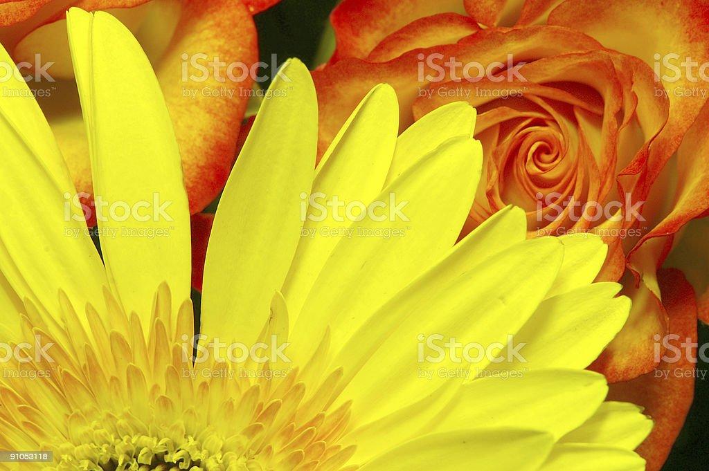 Yellow daisy and orange rose royalty-free stock photo