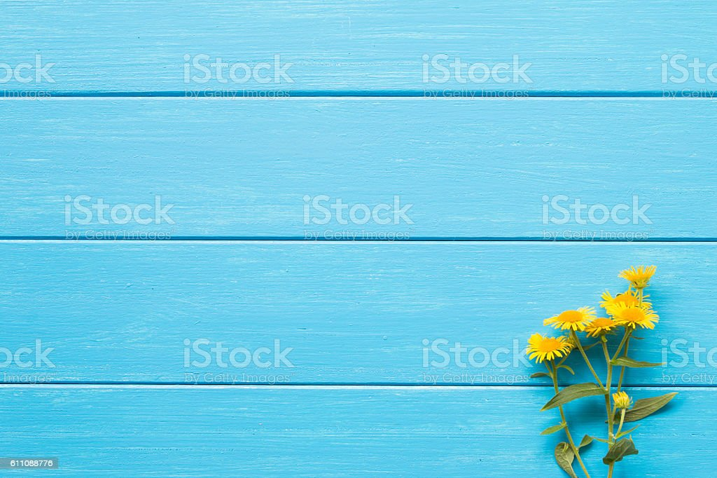 Yellow daisy on a blue board stock photo