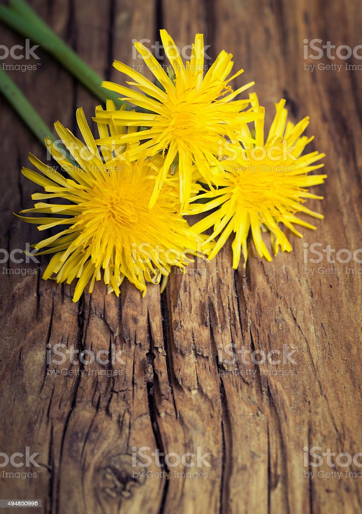 Yellow dandelion on wooden old background stock photo