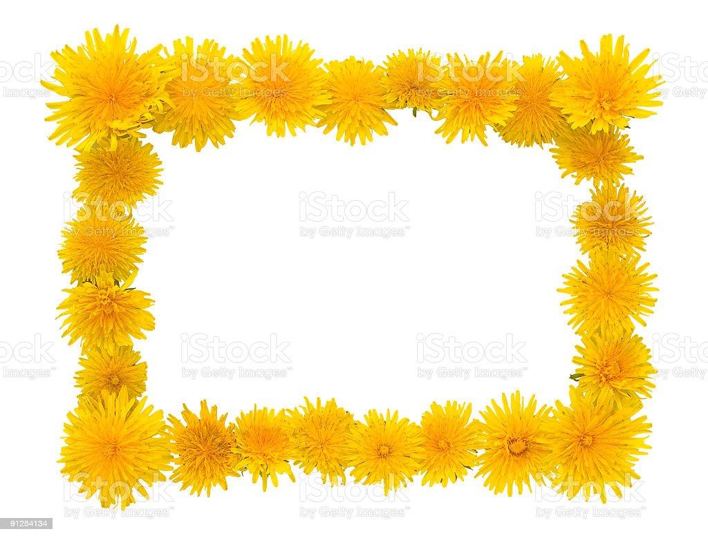 Yellow danielon frame royalty-free stock photo