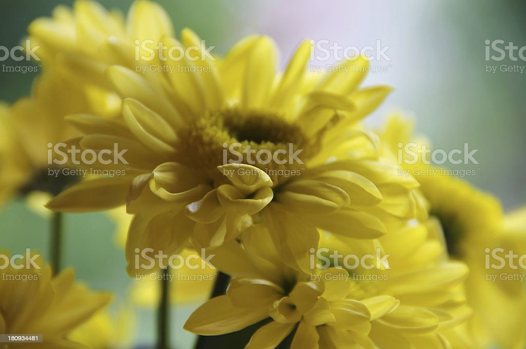 Yellow dreamy flower royalty-free stock photo
