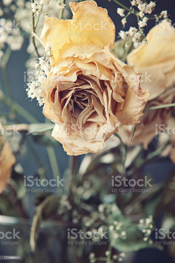Yellow Dried Rose Cloe Up royalty-free stock photo