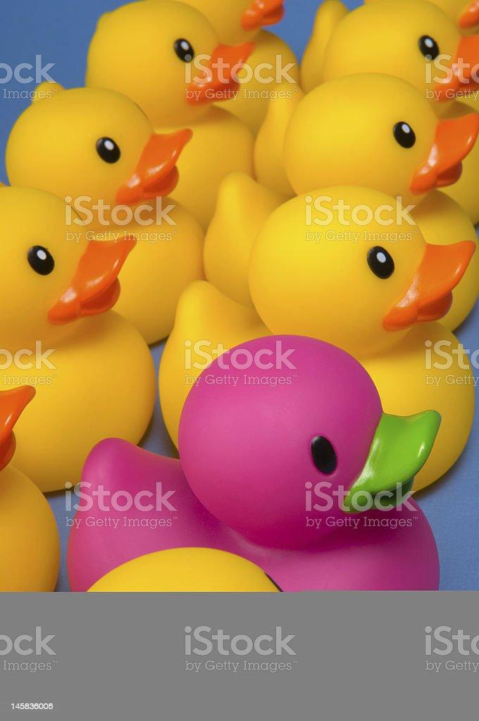 Yellow ducks and a single purple duck stock photo