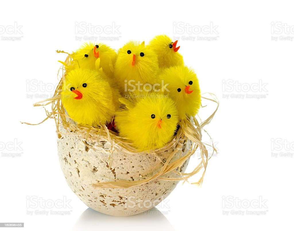 yellow easter chicks royalty-free stock photo