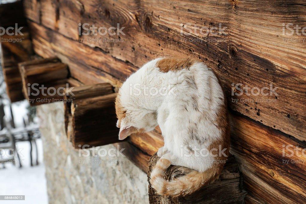yellow eye cat is hidding stock photo