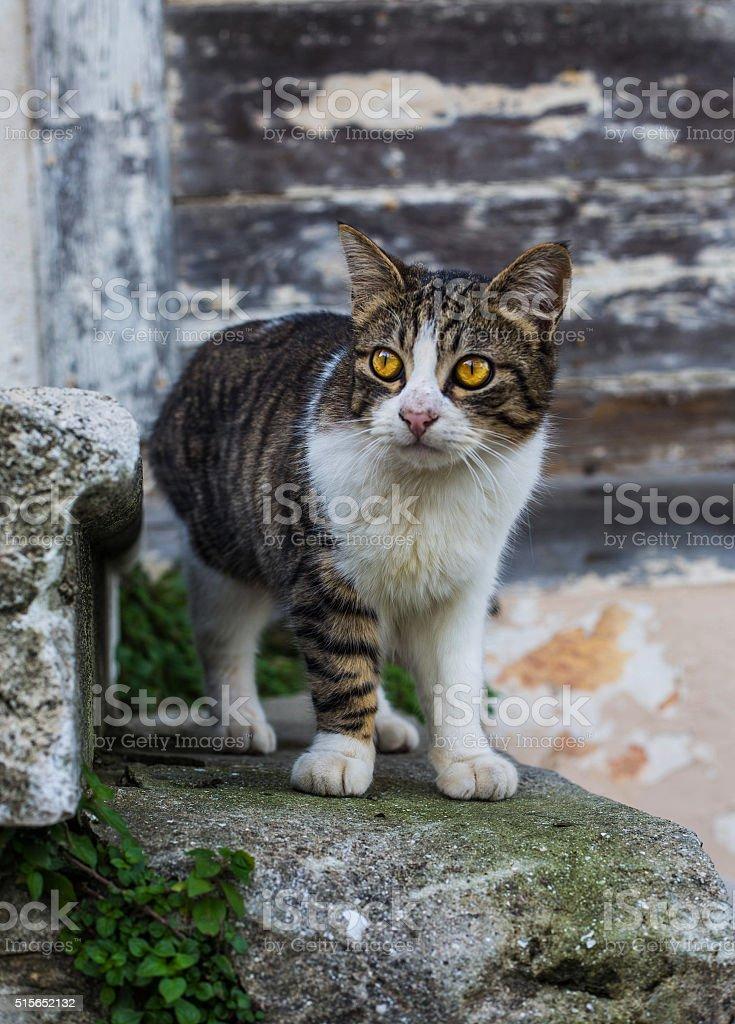 yellow eyes kitten stock photo