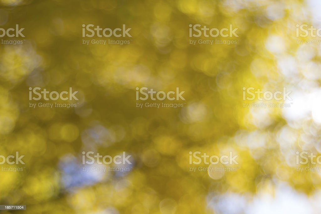 Yellow Fall Foliage Blurred Background royalty-free stock photo