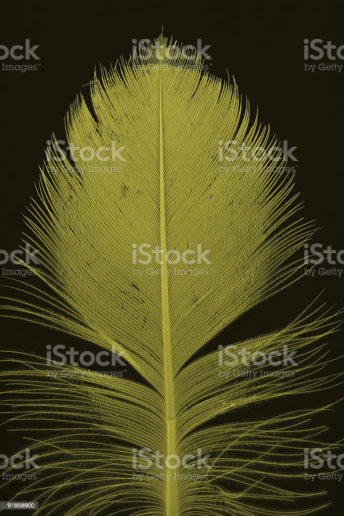 yellow feather on black royalty-free stock photo