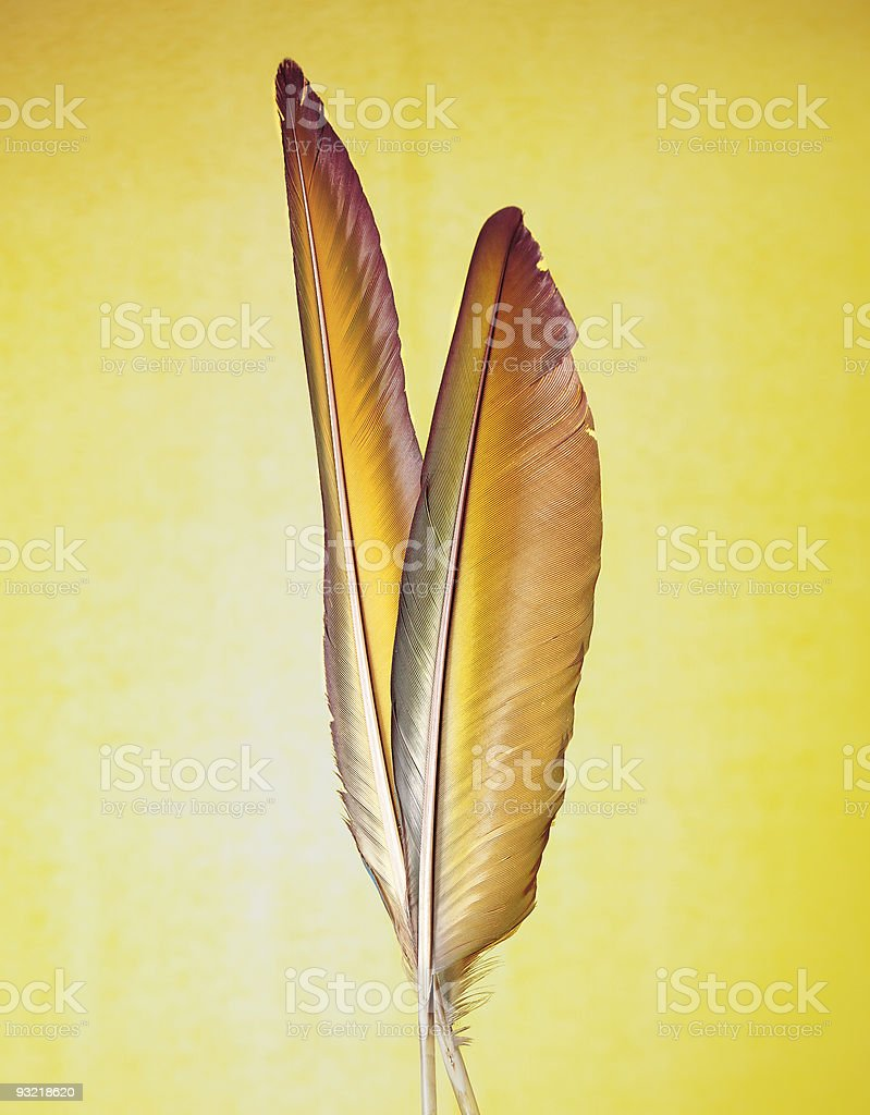 yellow feather royalty-free stock photo