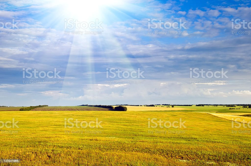 Yellow field and dark blue sky with sun beam royalty-free stock photo