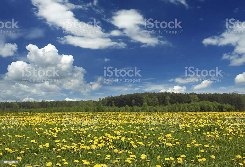 Yellow field - Landscape royalty-free stock photo