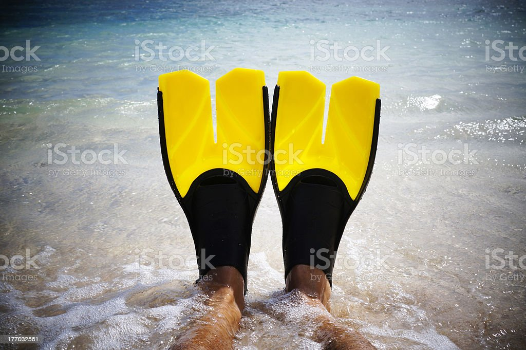 Yellow fins stock photo