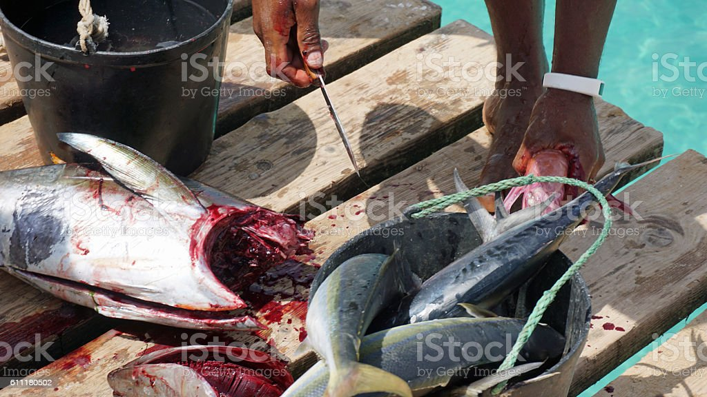 yellow fins tuna stock photo