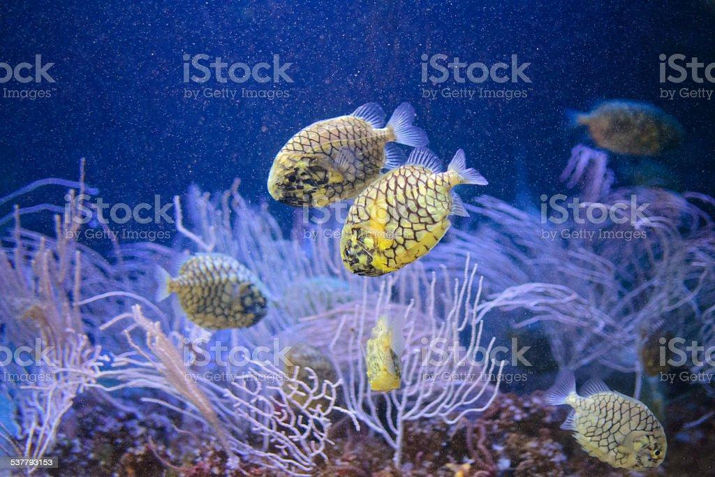 fishes amarillo foto de stock libre de derechos