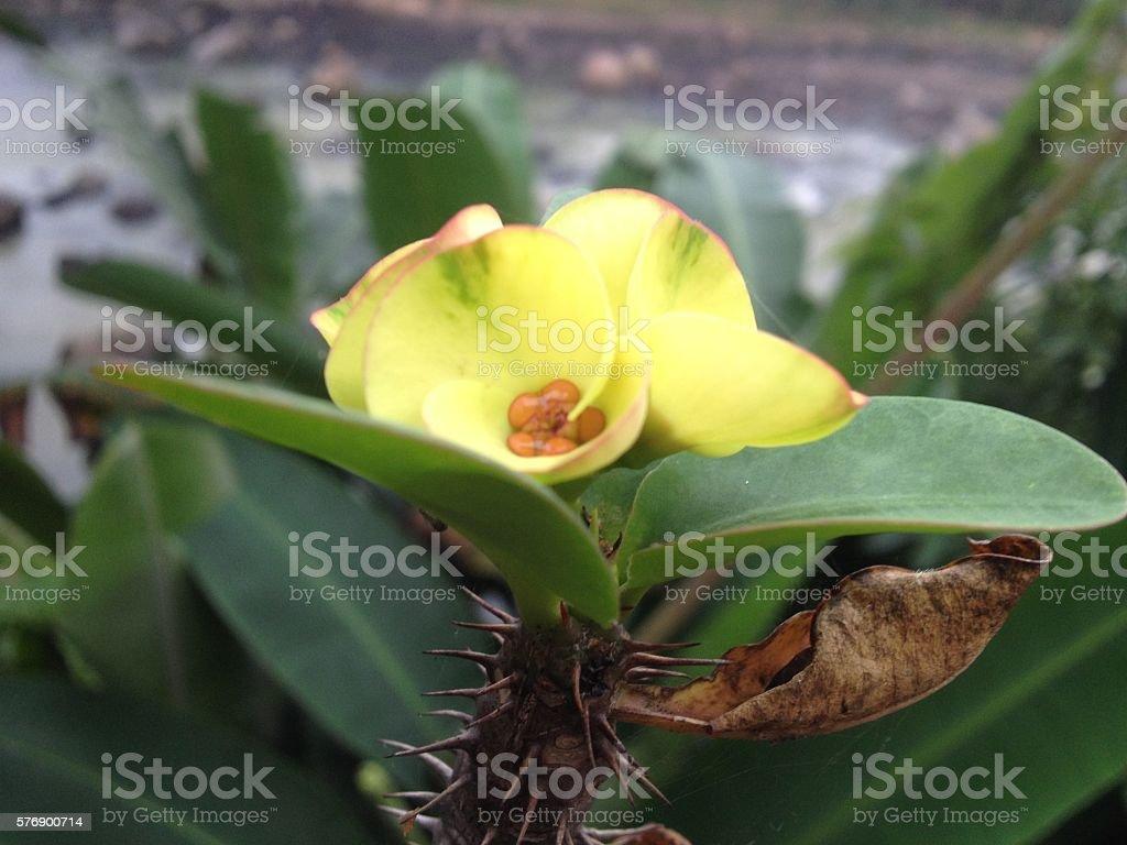 Yellow Floower stock photo