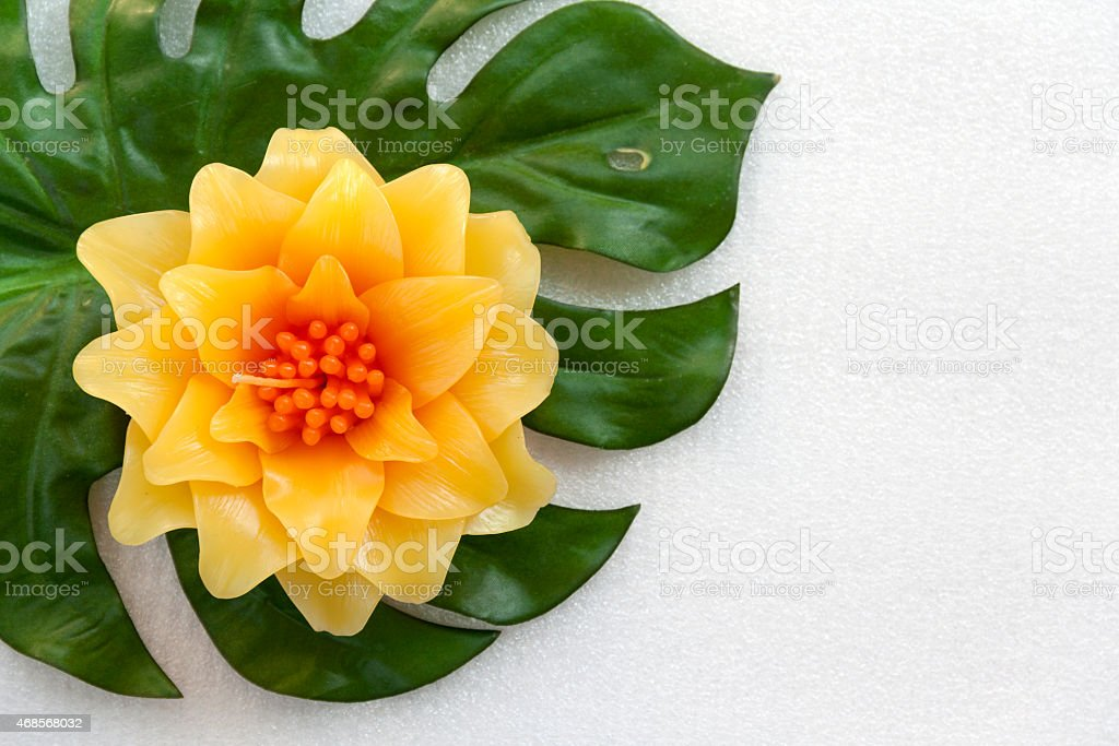 Yellow flower and green leaf royalty-free stock photo