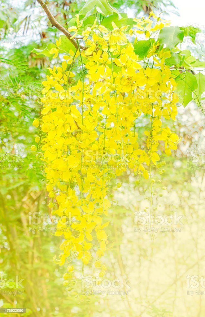 yellow flower background stock photo