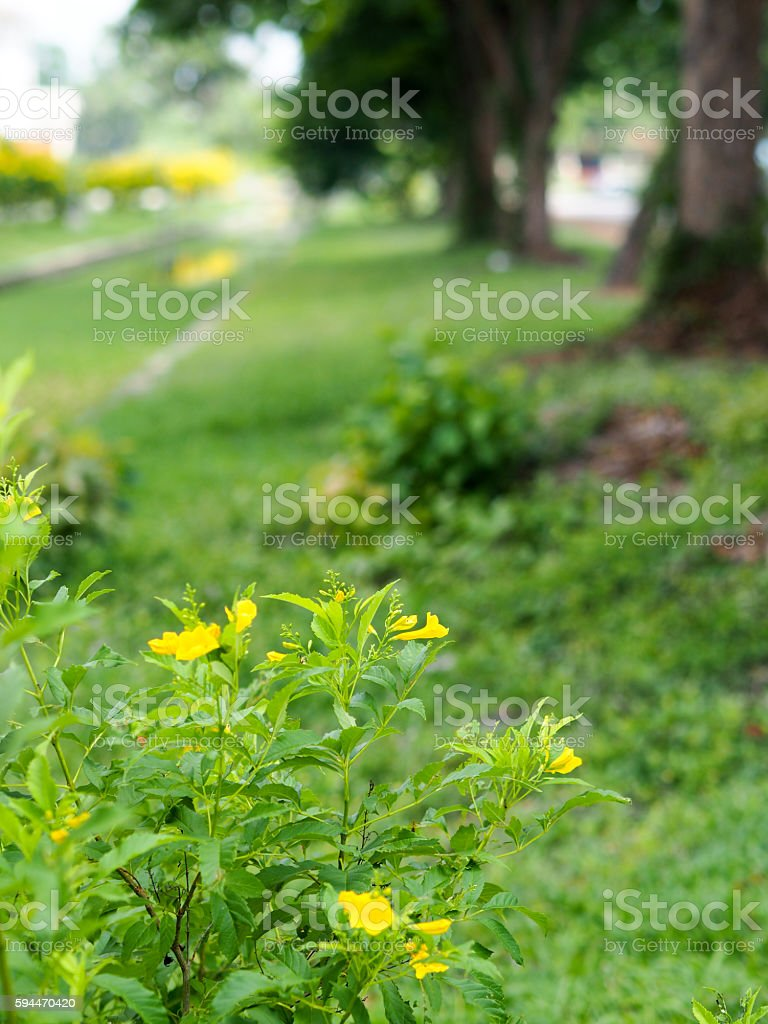 Yellow flower beside the canel stock photo