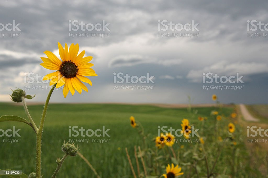 yellow flower by road stock photo
