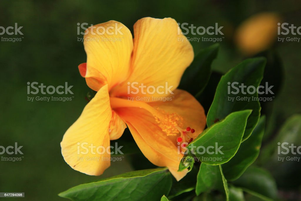 Yellow flower close-up background stock photo