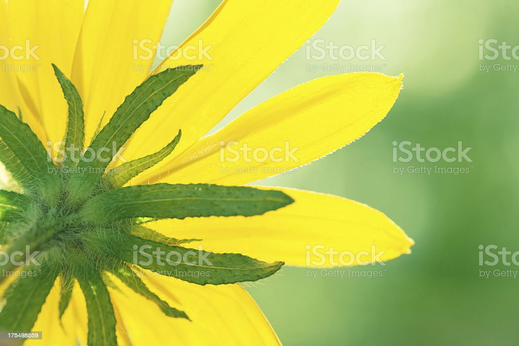 Yellow flower closeup royalty-free stock photo