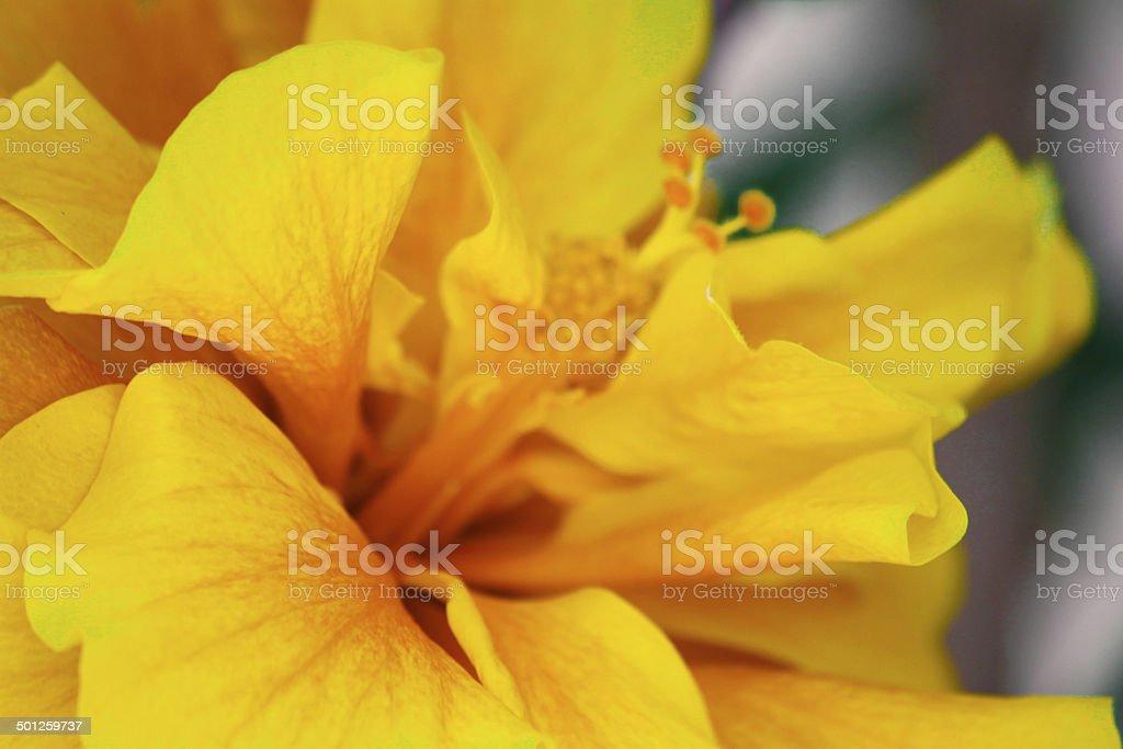 Yellow flower close-up stock photo