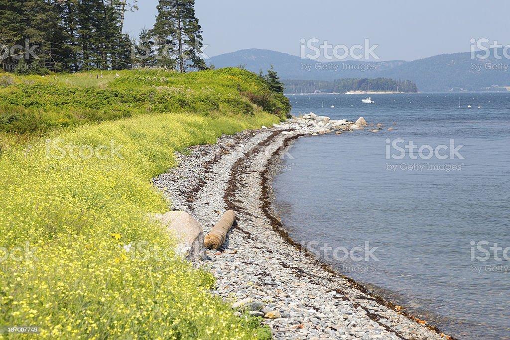 Yellow Flower Coastline royalty-free stock photo