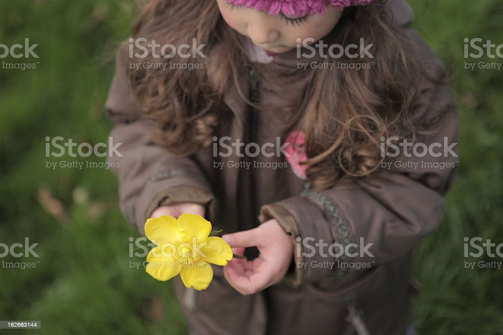 Yellow flower in child's hands royalty-free stock photo