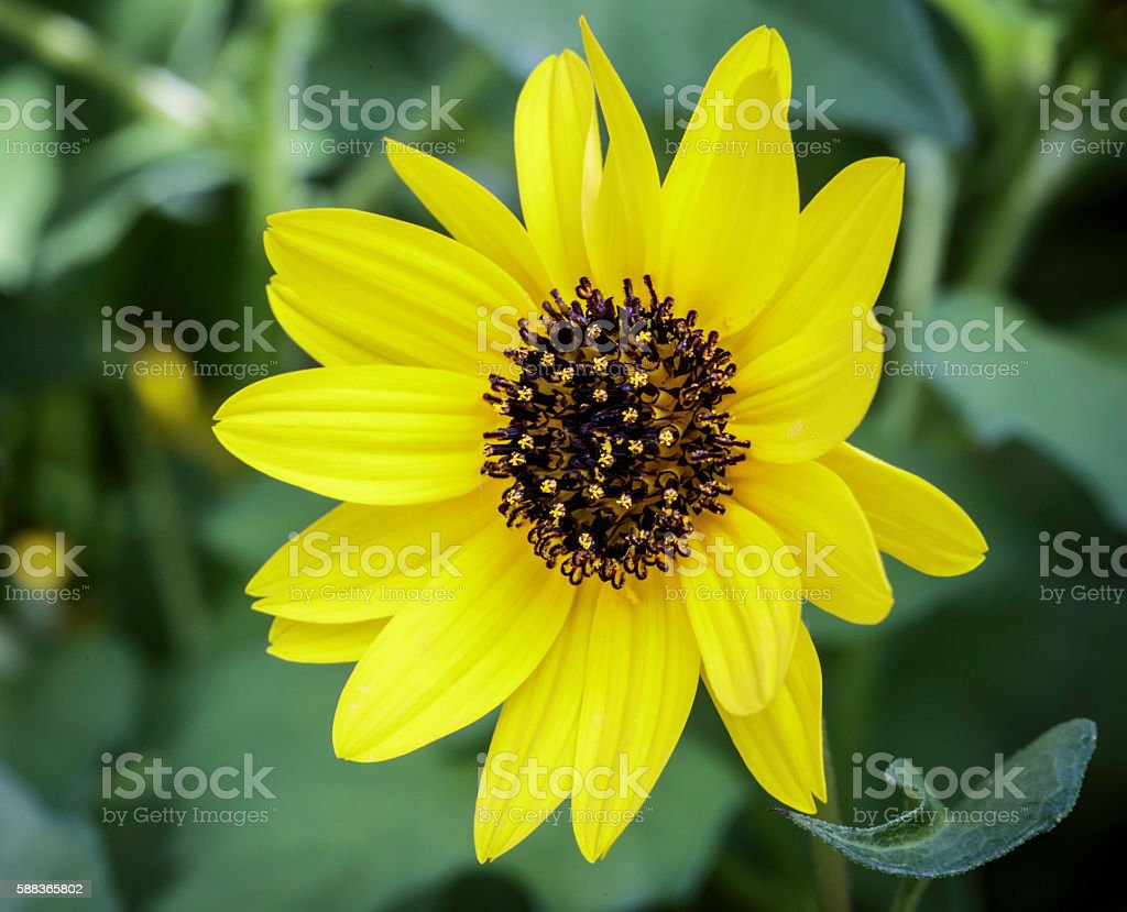 Yellow Flower In Macro Found In The Islands stock photo