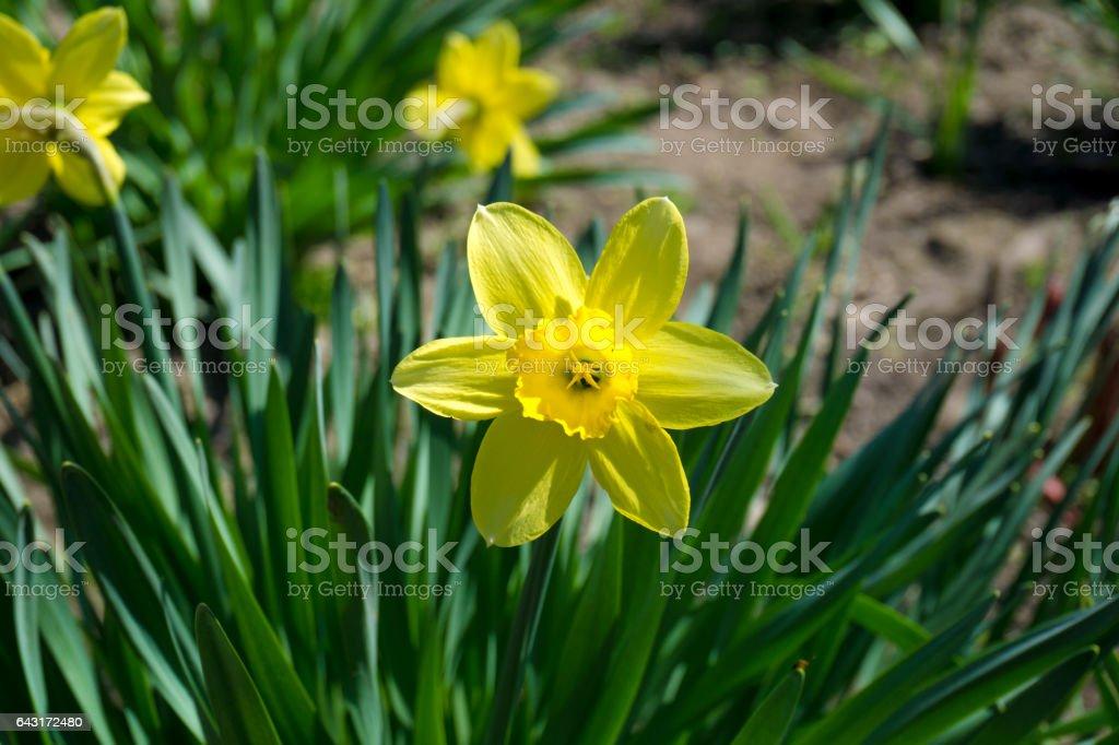 Yellow flower in the grass macro stock photo