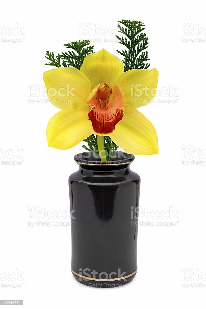 Yellow flower (orchid) in vase royalty-free stock photo